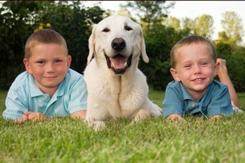 Pets can be as demanding as kids.