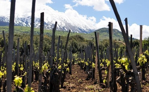 Salvo Foti is the benchmark for traditional farming and organic viticulture on Etna.